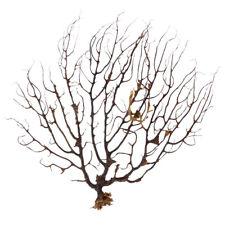 New listing �Usa】Sea Fan Sea Tree Aquarium Plants Fish Tank Decoration Sea Coral Ornament