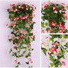 Morning Glory Bonsai Suitable Garden Plants A Variety Mixed Color 100 PCS Seeds