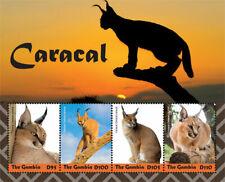 Gambia 2019  fauna caracal   I201901