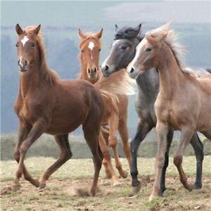 Horses Dancing In The Wind Greetings Card - birthday, blank inside