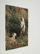 H353 postcard Prairie Dogs Ranch Store Kadoka Sd South Dakota