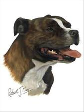 Staffordshire Bull Terrier Dog Robert May Art Greeting Card Set of 6