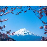 Ying Cherry Blossom Mount Fuji Japan Large Canvas Wall Art Print