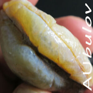 Coober Pedy Opal Shell Specimen 152.80 Carats