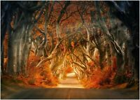Autumn Forrest CANVAS WALL ART PICTURE 20X30 INCHES