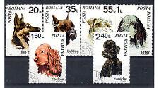 Rumania Fauna Perros serie del año 1971 (AY-538)