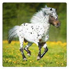 Kühlschrank - Magnet: galoppierender Schimmel - Pferd - horse - cheval