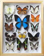 LUXURY STYLE REAL 14 MIX BUTTERFLY WITH ULYSSE IN WOOD COLOR FRAME DISPLAY