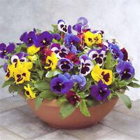 50pcs/pack pansy seeds Mix Color Flower Seeds bonsai potted Plant HI