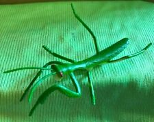 d&d mini miniature plastic toy giant praying mantis insect monster bug fantasy