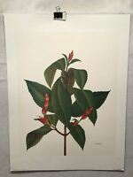 """E.R. Saal """"The Feeder"""" Limited Edition Lithograph Print Java Collection"""
