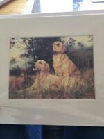 Golden Retriever Print by Robert J. May Mounted 10 X 12 Ready To Frame