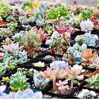 300pcs Mix Succulents Seeds Flower Seeds Mixed Rare Potted Plant Home Garden FW