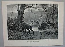 Schwarzwild, Wildschweine am Waldsee - Holzschnitt nach G.F.Rötig 1895