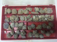 Fossili 78 pezzi  provenienza Germania come da foto
