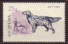 Setter Dogs Albania MNH stamp 1966