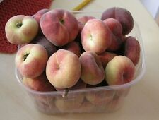 ORCHARD -Cherry, Peach, Plum,Pear,Olive,Mulberry,Crab Apple,Blackberry Hazelnuts