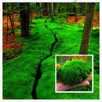 100 Pcs Seeds Bonsai Moss Garden Green Plants Decorative Grass Potted Home NEW V