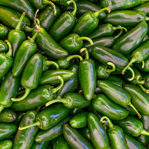 Fresh Green Jalapeno Chilli | 1kg | Chilli Mash Company