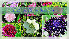 Sweet Scabiosa Doubles Mix Flower 40 plus Seeds
