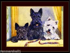 Print Scottish West Highland Terrier Dog Dogs Puppy Puppies Poster Art Picture