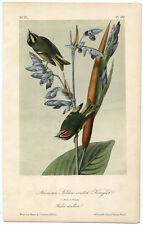 Audubon Royal Octavo American Golden-crested Kinglet Pl. 132