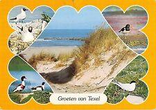 BT5879 Texel birds oisseaux    Netherlands