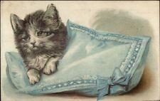 Kitten Kitty Cat on Blue Pillow c1910 Embossed Postcard