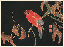 Japanese Art Print: Red Parrot on a Branch -  Fine Art Reproduction