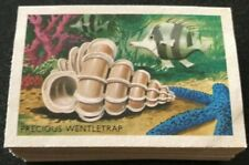 Shell Trade Cards SHELLS,FISH&CORAL Complete Set Of 60