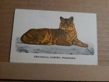 Postcard  Tiger Zoological Gardens Philadelphia Early Colour Card unposted