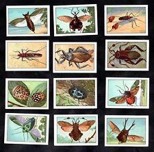 Punaises True Bugs Insects Nestle 1950 Poster Stamp Card Set Entomology Heteropt