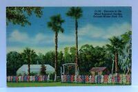 Winter Park Florida Mead Botanical Garden Linen Vintage Postcard