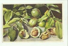 137907 stupenda cartolina artistica frutta di s. bonelli
