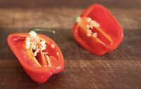 15 Seeds Fire Red Hot Habanero  Super Chili  Peppers  USA SELLER