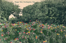 POPPY BED, BURLINGAME, CAL. CA. CALIFORNIA.