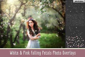 White and Pink Petals Photoshop Overlays