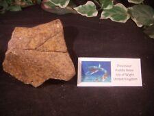 Dinosaur Bone Plesiosaur Beautiful Paddle Bone Isle of Wight United Kingdom