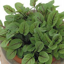 Herb Seeds - Sorrel Red Veined - 6000 Seeds