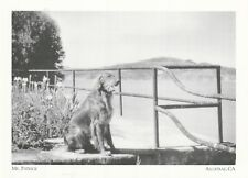 """~Post Card~Mr. Patrick"""" /Only Dog Ever To Live In Alcatraz-  *CA. (A74-1)"""