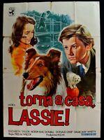 Poster Back A Zuhause Lassie Elizabeth Taylor Collie Hund Crisp Wilcox M303