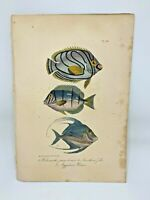 Fish Plate 99 Lacepede 1832 Hand Colored Natural History