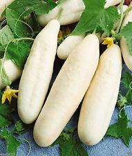 White Wonder Cucumber *Heirloom* (50 Seed's) <Non-GMO>