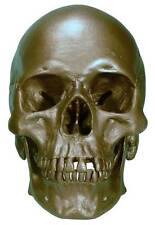 Human Skull Replica, #3093-BRONZE Metallic Color, Life Size: Direct From USA