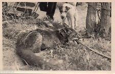 BL816 Carte Photo vintage card RPPC Chasse Piege Renard Chein dog