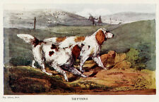 English Orange Chestnut Field Setters Hunting Dogs - Gun Dog - Alken Print 1903