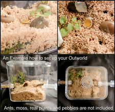 Small Ant Spider Arena Formicarium Farm Ant Housing  ant outworld set