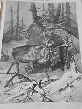Gravure 1883 - L'embuscade Le Renne attaqué par un Lynx