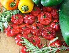 Hot Pepper - Scotch Bonnet Red - 120 seeds - Vegetable