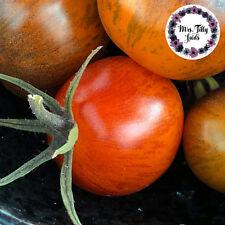 """TOMATE /""""Orange Sun /"""" sehr schmackhaft Stabtomate süß tief orange saftig"""